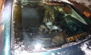 Ukradnutých 7 psov v Doľanoch