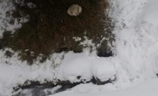 Premrznutý psík v Novej Ľubovni